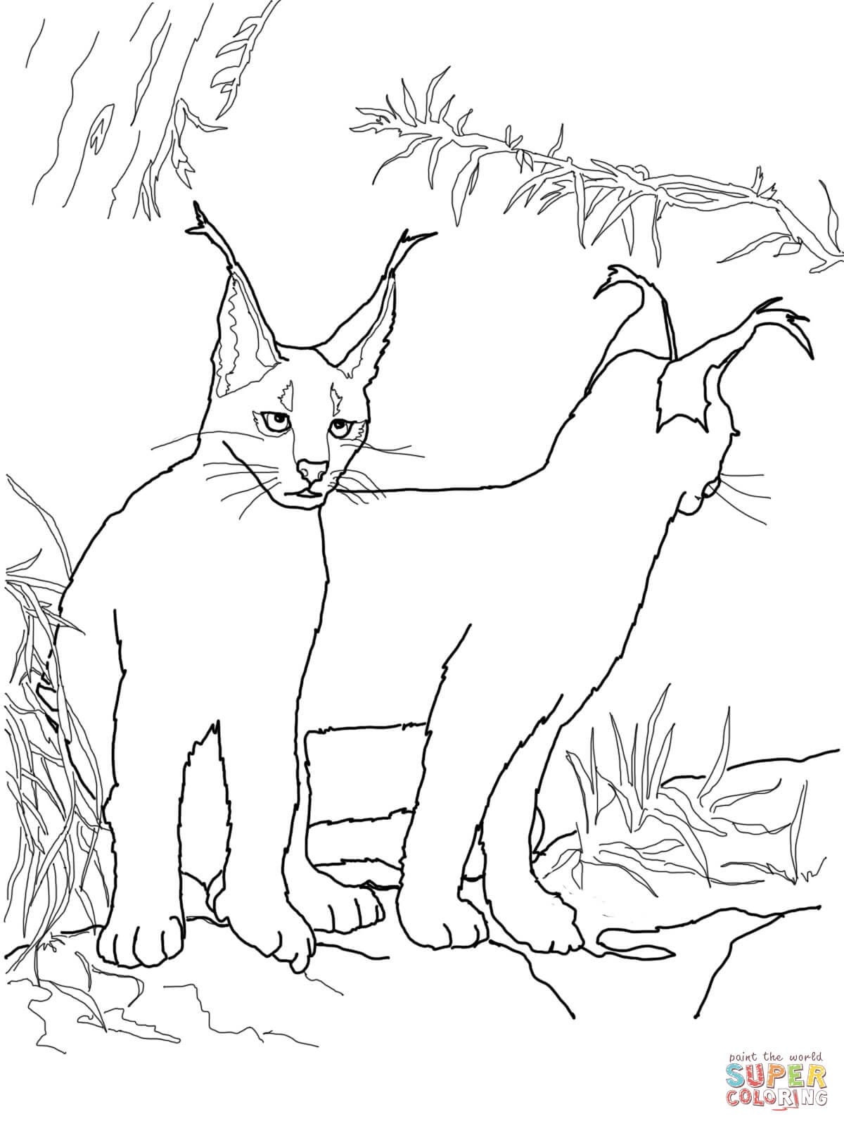 caracal kittens coloring page free printable coloring pages