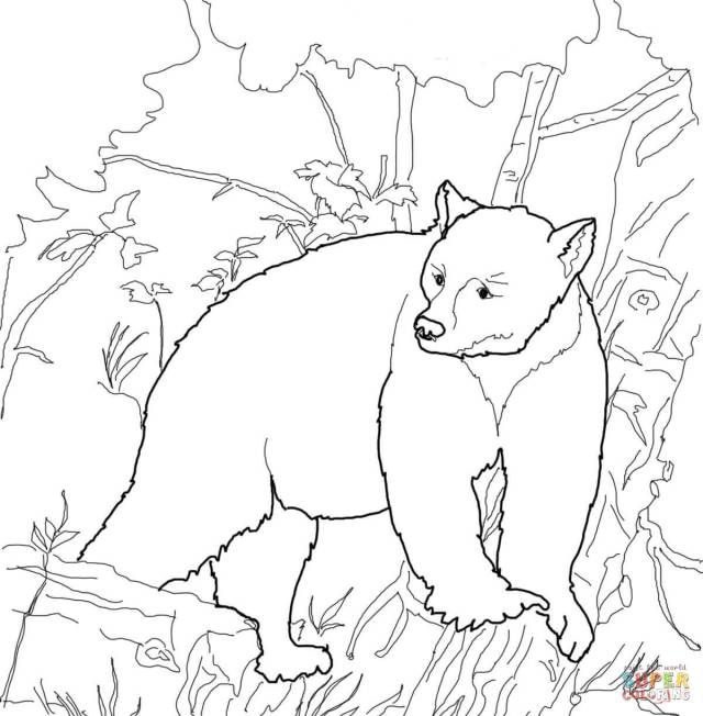 Kermode Bear coloring page  Free Printable Coloring Pages