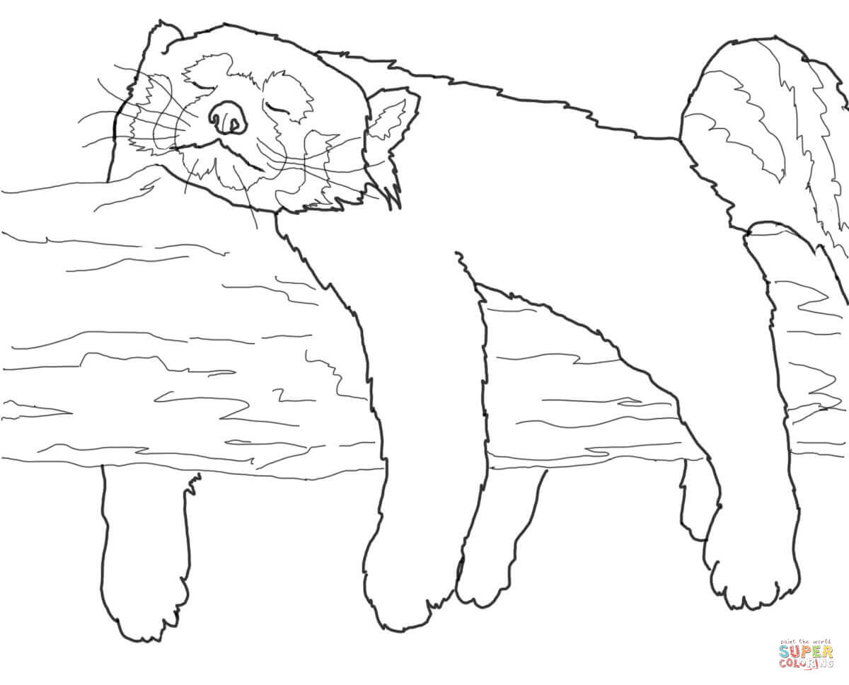 red panda sleeping coloring page free printable coloring pages