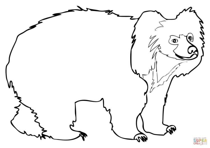 sloth bear coloring page  free printable coloring pages