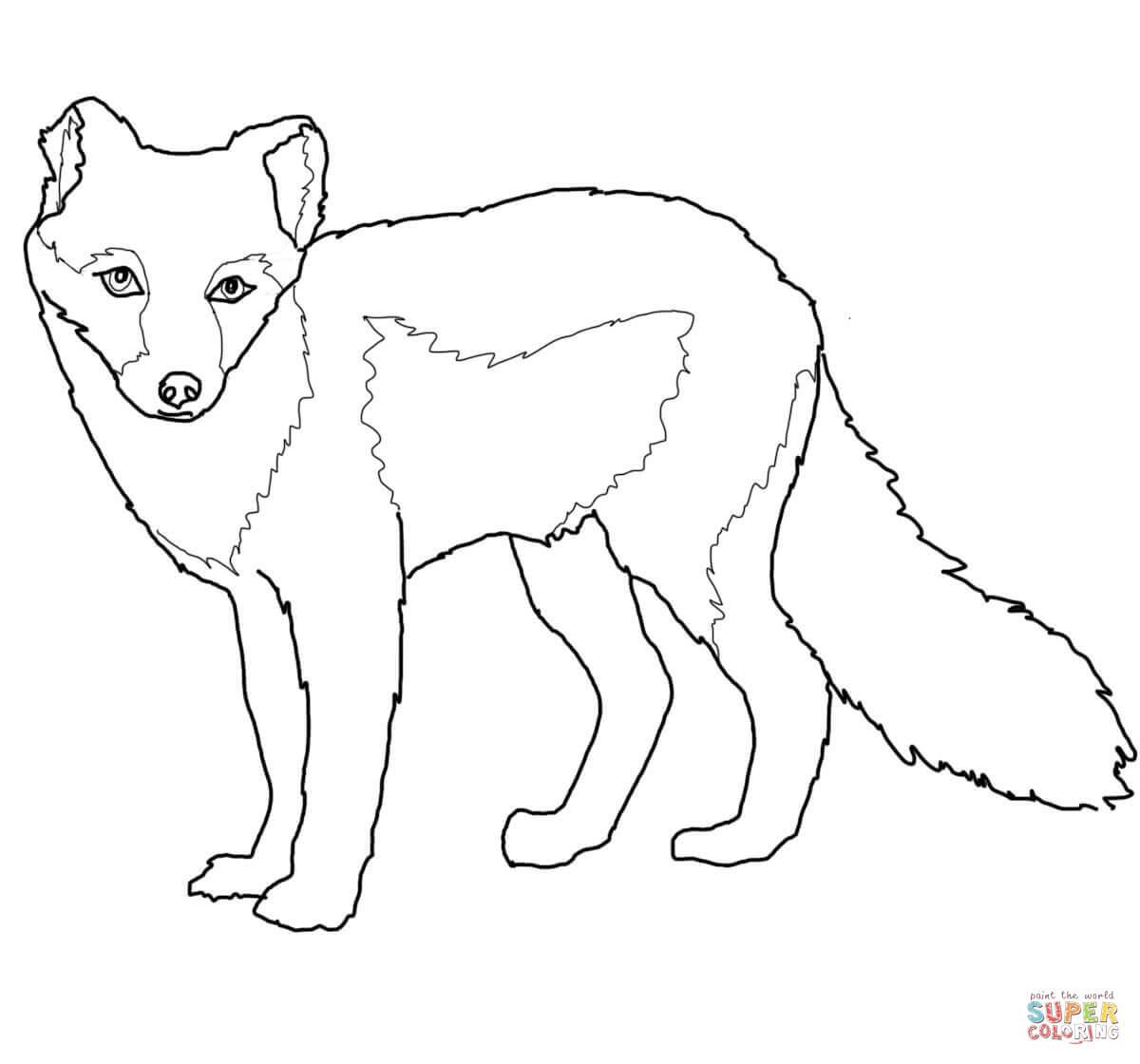 Arctic Fox Summer Coat Coloring Page