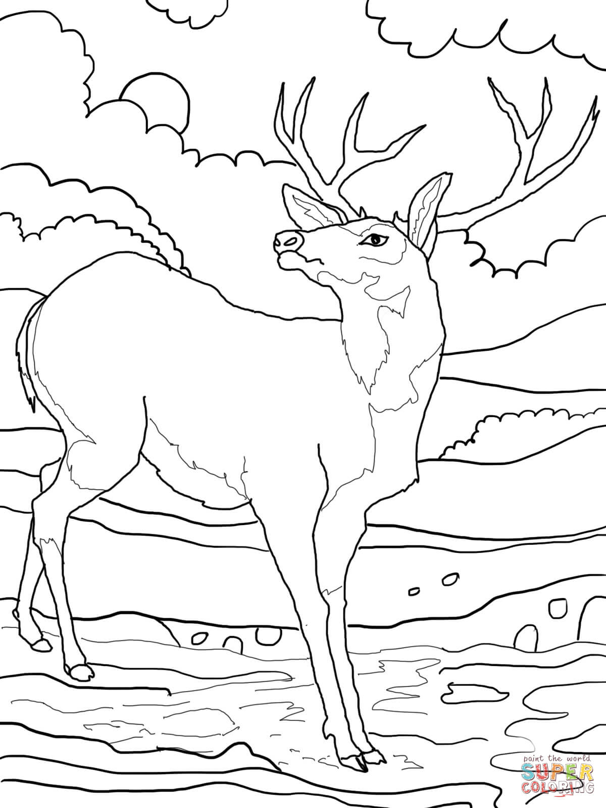 Black Tailed Mule Deer Coloring Page Free Printable Coloring Pages