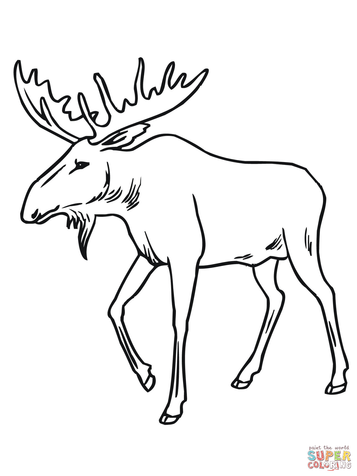 Bull Moose Coloring Page