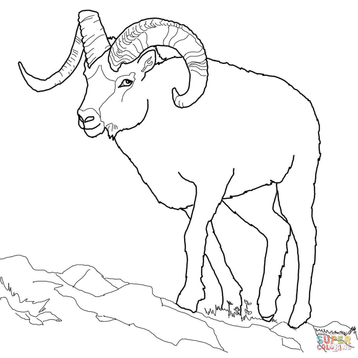 Dall Sheep Coloring Page