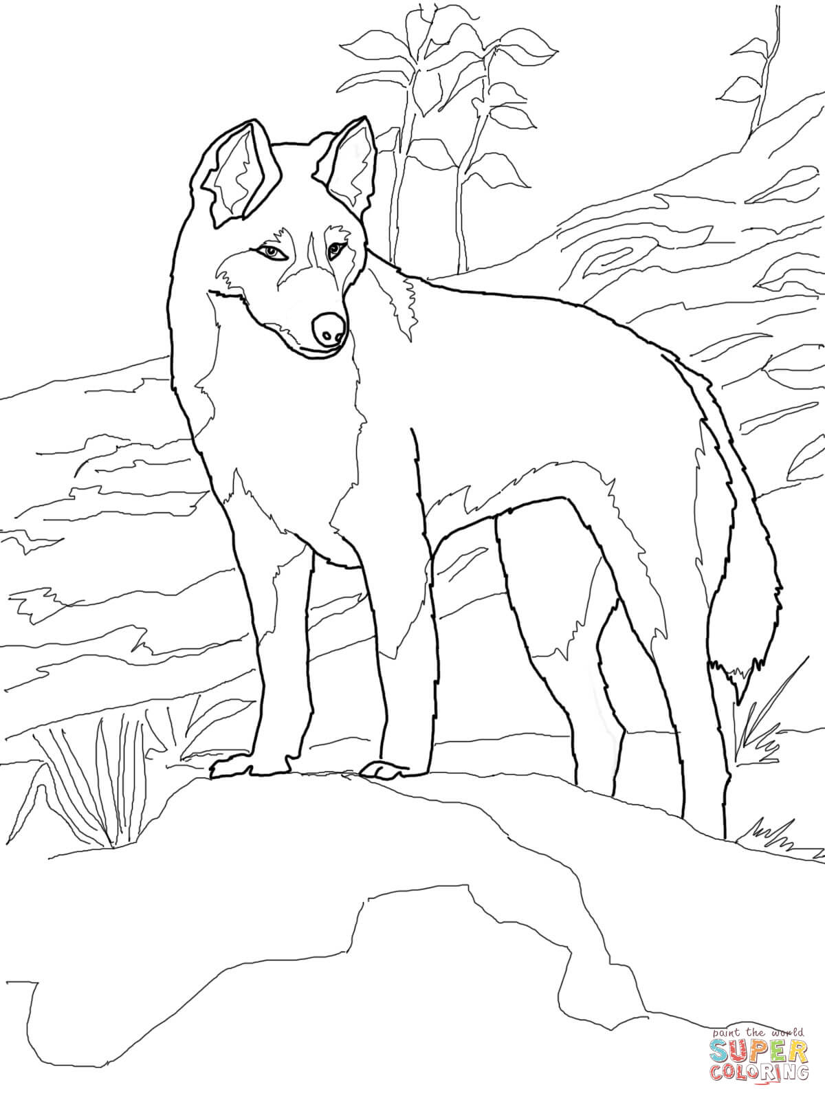 dingo from australia coloring page free printable coloring pages