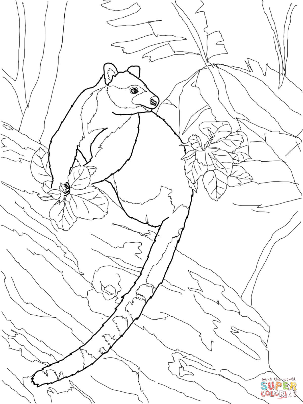 Goodfellow S Tree Kangaroo Coloring Page