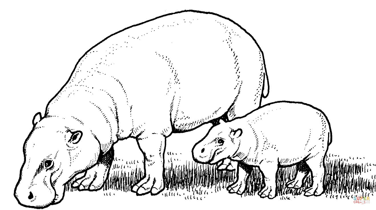 pygmy hippopotamus mother with baby coloring page free printable