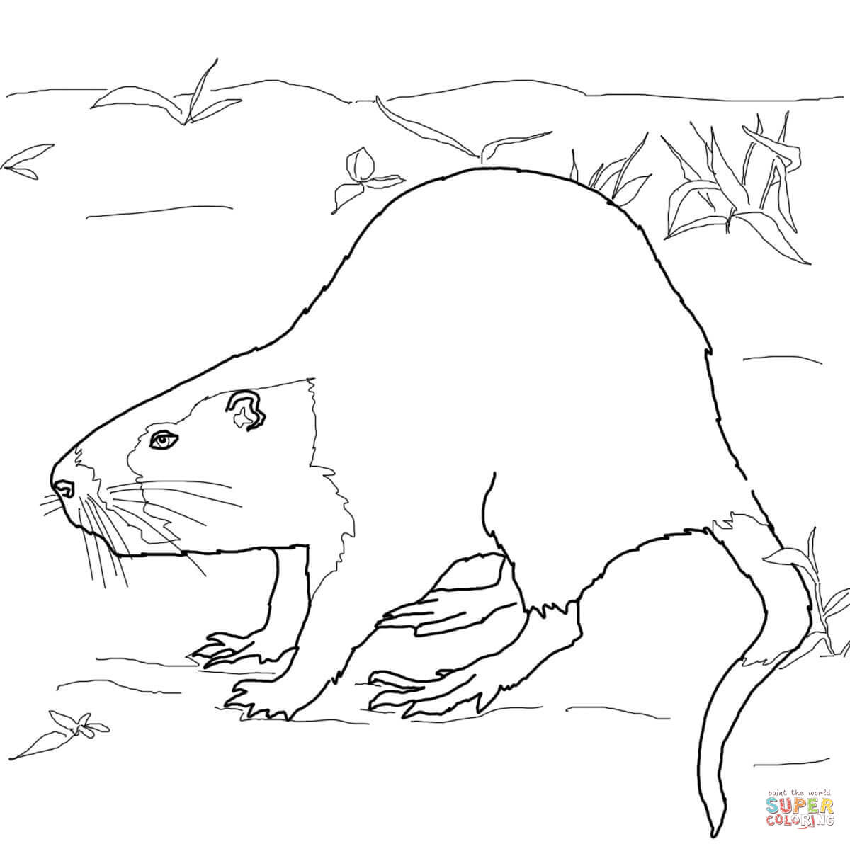 click the nutria rat coloring page to view printable version or color