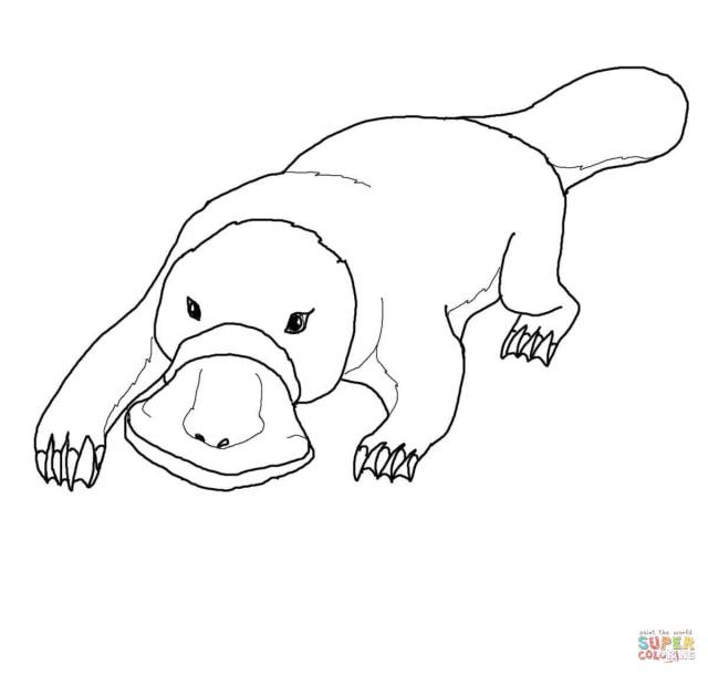 Platypus coloring pages  Free Coloring Pages