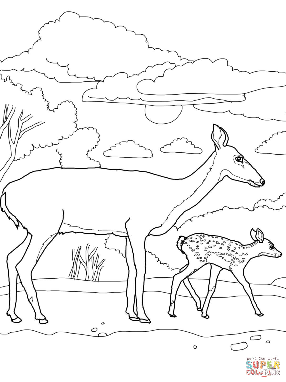white tailed deers coloring pages free coloring pages