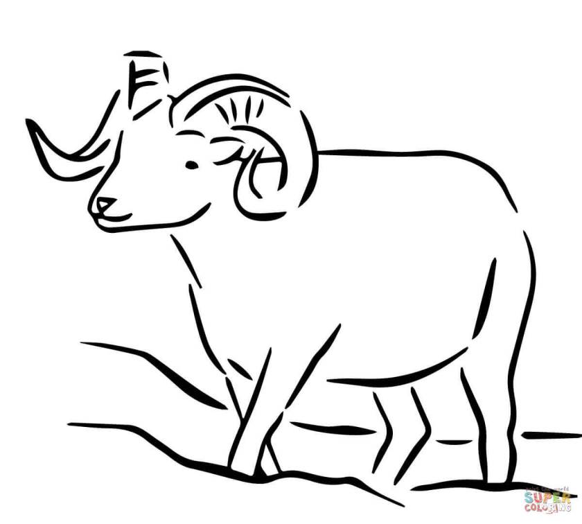 alaska dall sheep coloring page  free printable coloring