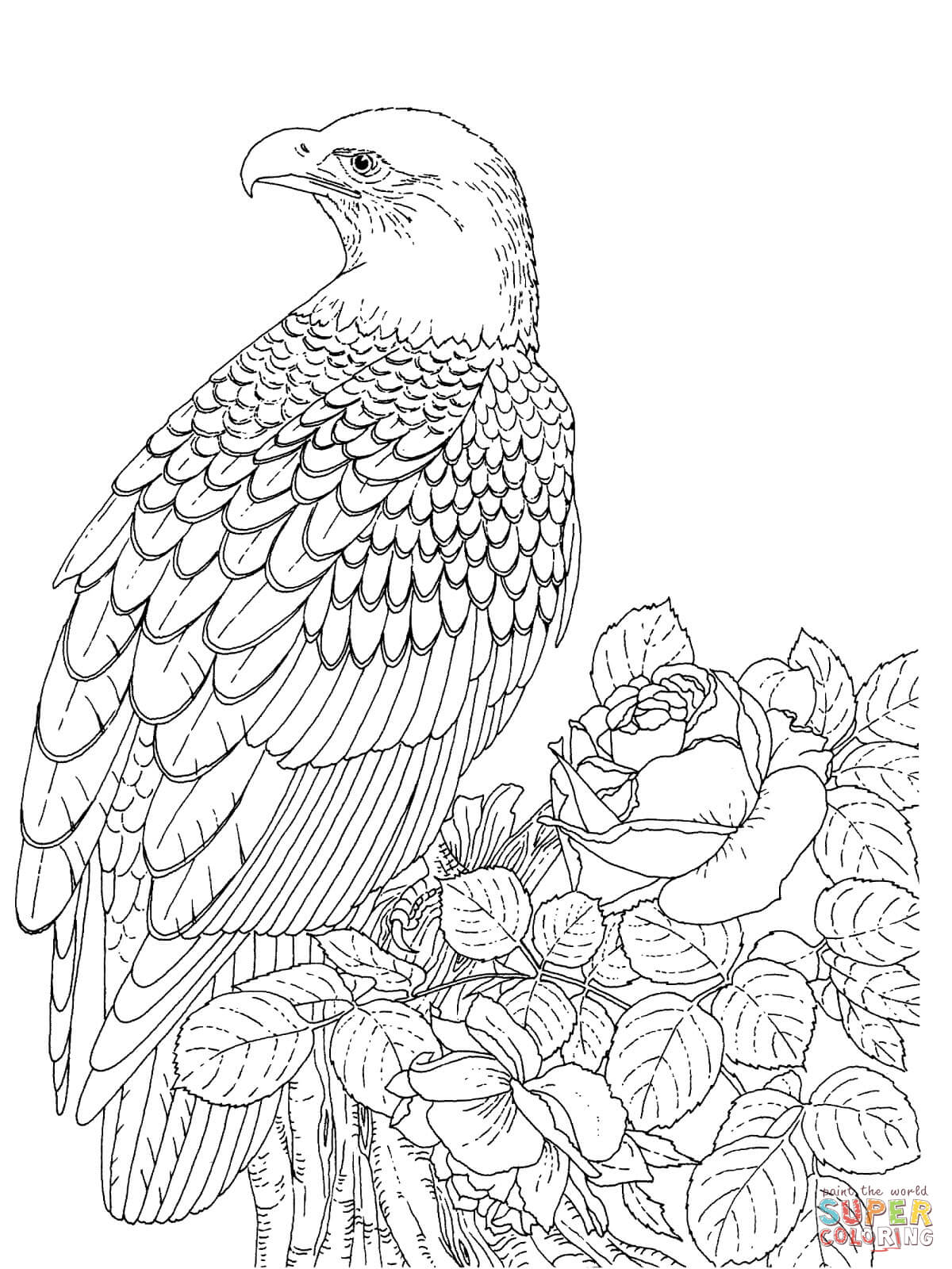 realistic bald eagle coloring page free printable coloring pages