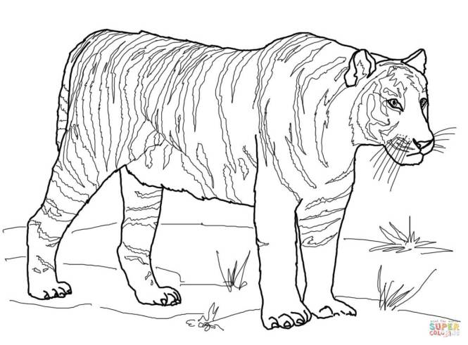 Click The Bengal Tiger Coloring Pages