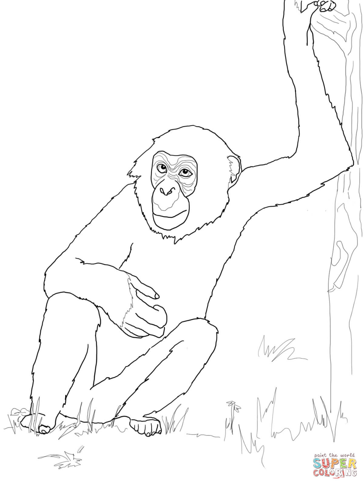 bonobo chimpanzee coloring page free printable coloring pages