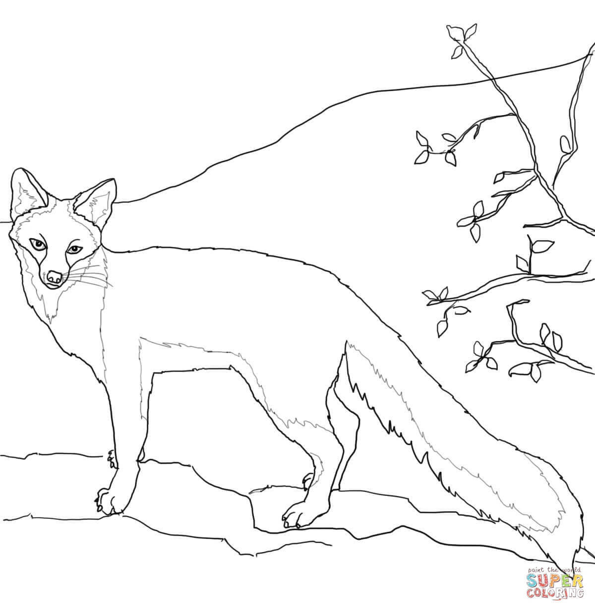 Gray Fox Coloring Page