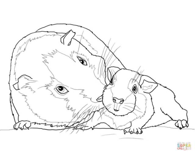 Guinea Pig Mother and Baby coloring page  Free Printable Coloring