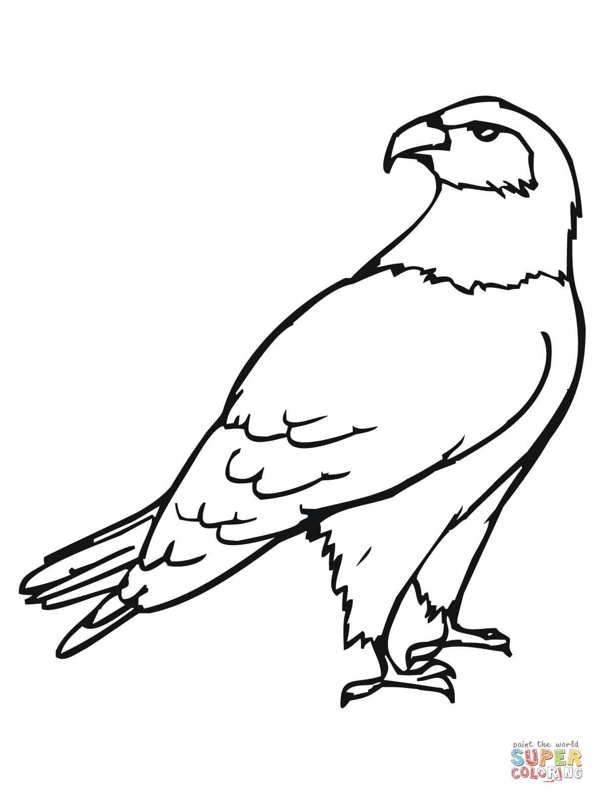 Disegno Di Il Falco Da Colorare