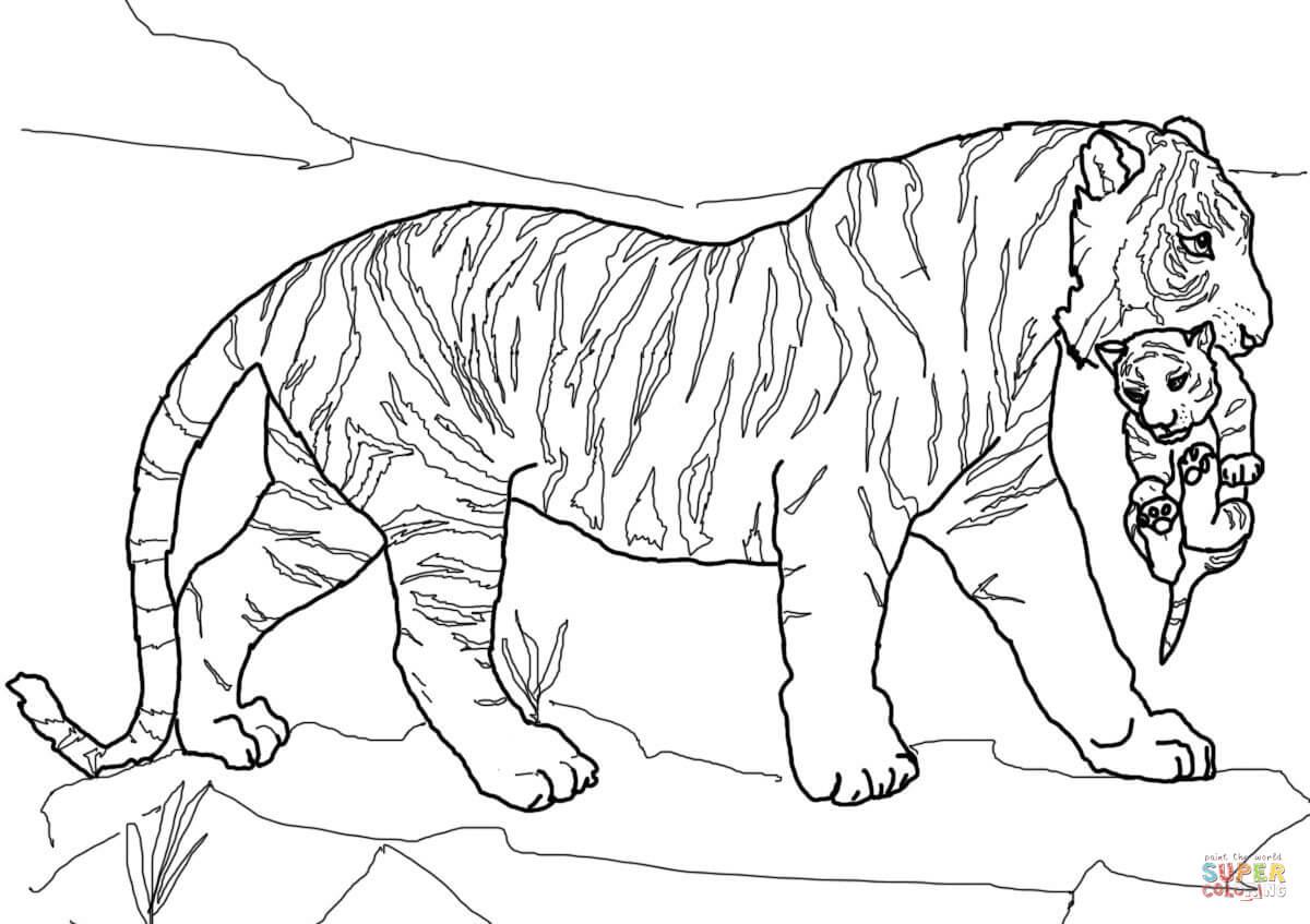 coloriage tigresse qui porte son bébé dans sa gueule coloriages