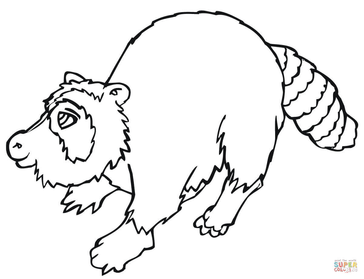 North American Raccoon Coloring Page