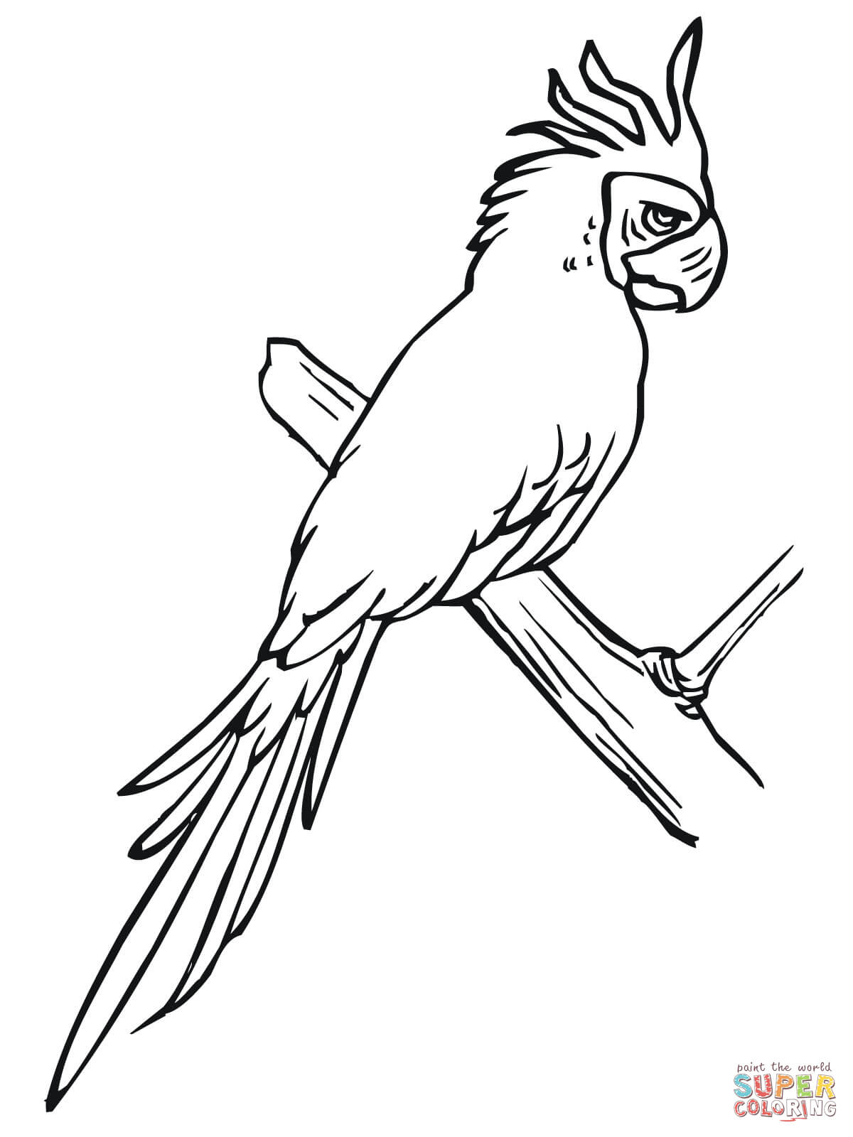 Parakeet Perched On A Tree Coloring Page