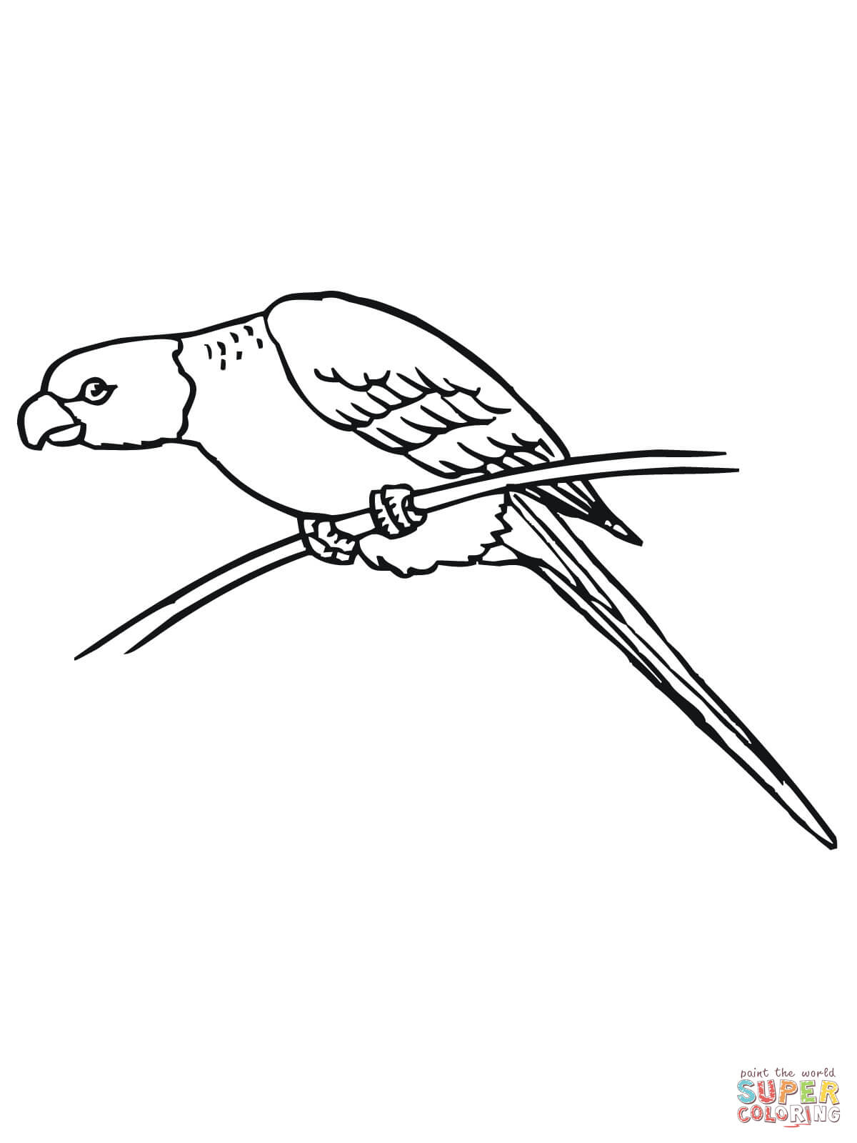 Perched Parakeet Coloring Page
