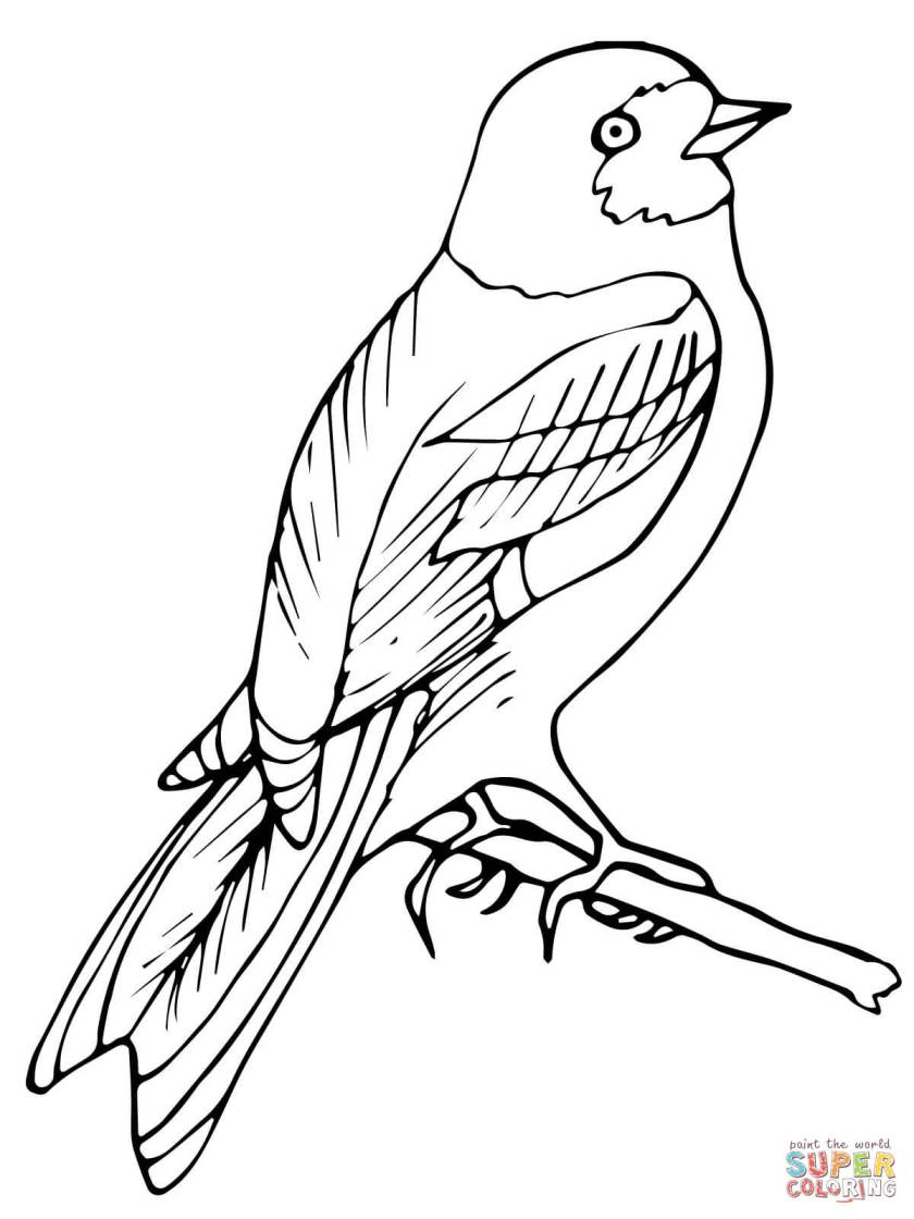 perched wren bird coloring page  free printable coloring