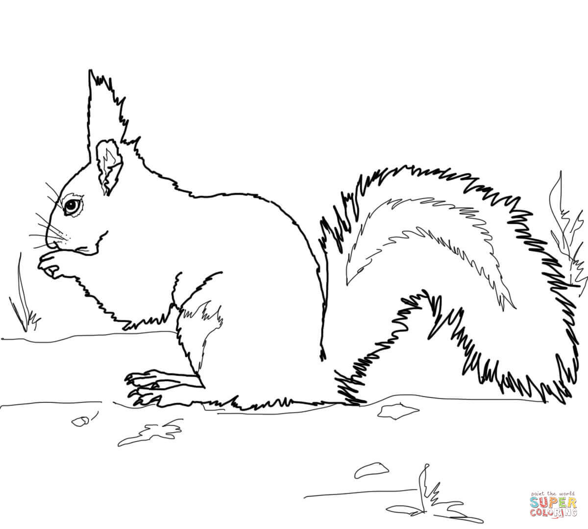 squirrels coloring pages free coloring pages