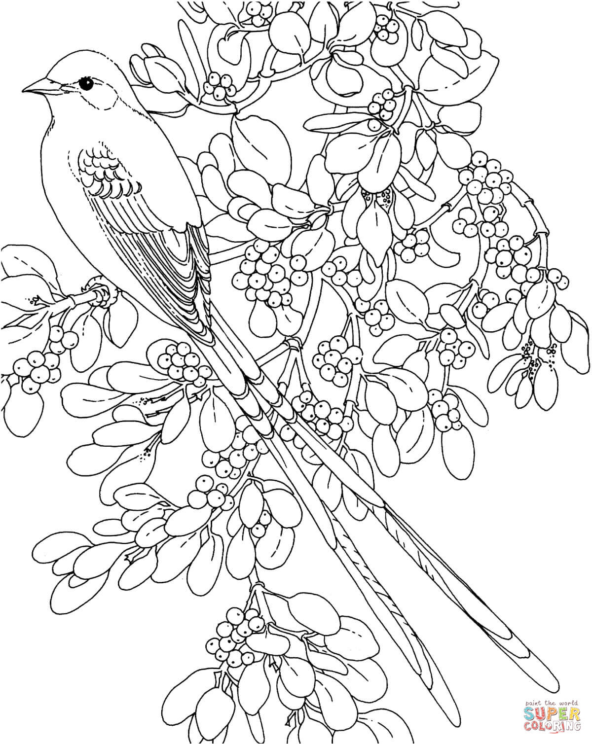 Oklahoma Scissor Tailed Flycatcher And Mistletoe Flower