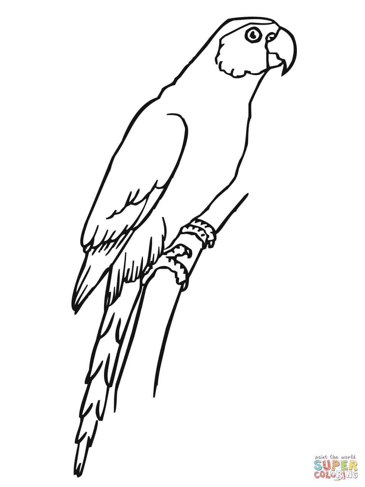 Dibujo De Periquito Sentado Para Colorear
