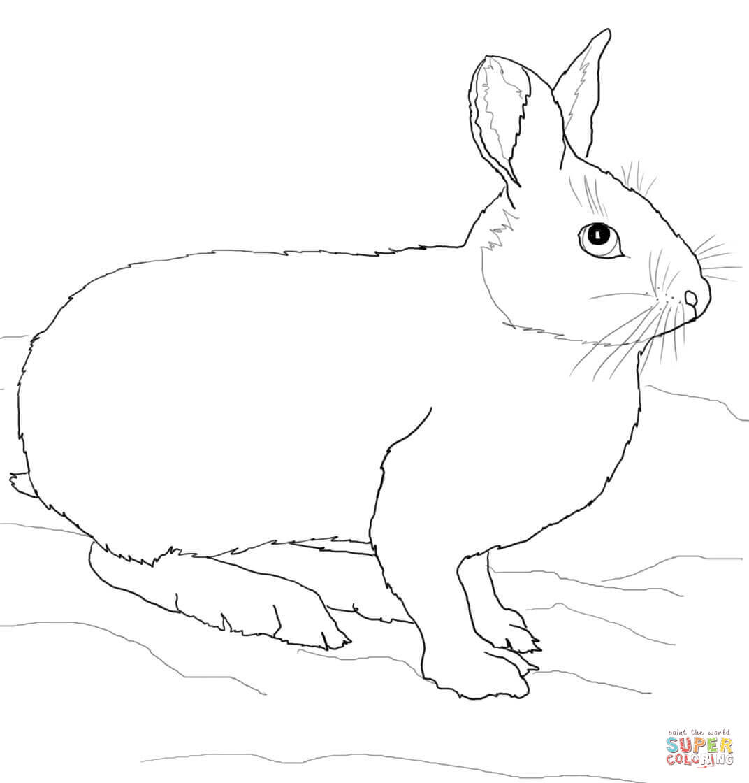 Mammals Hares Cartoon Hares Coloring Pages Printable