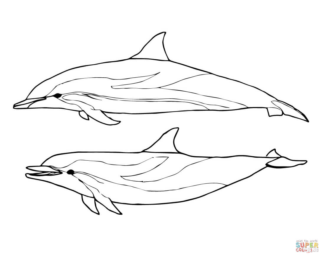 Two Striped Dolphins Coloring Page