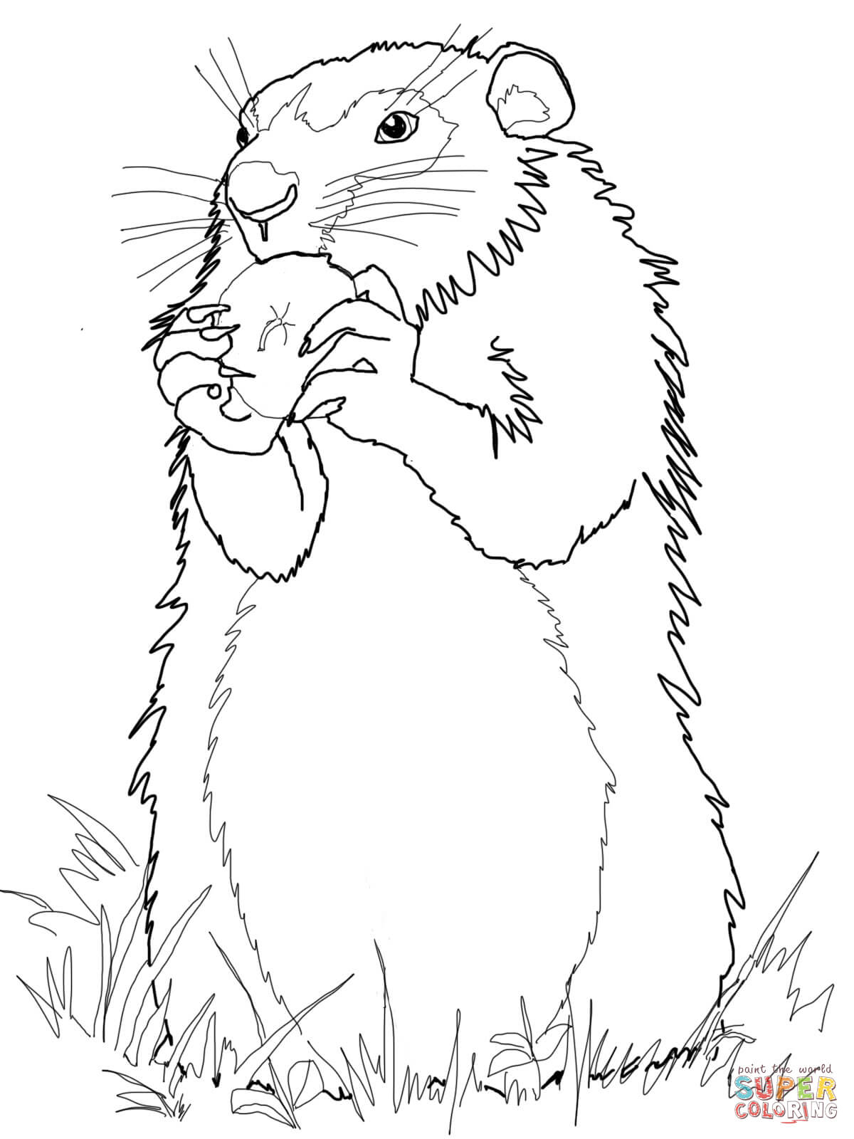 Woodchuck Eats Apple Coloring Page