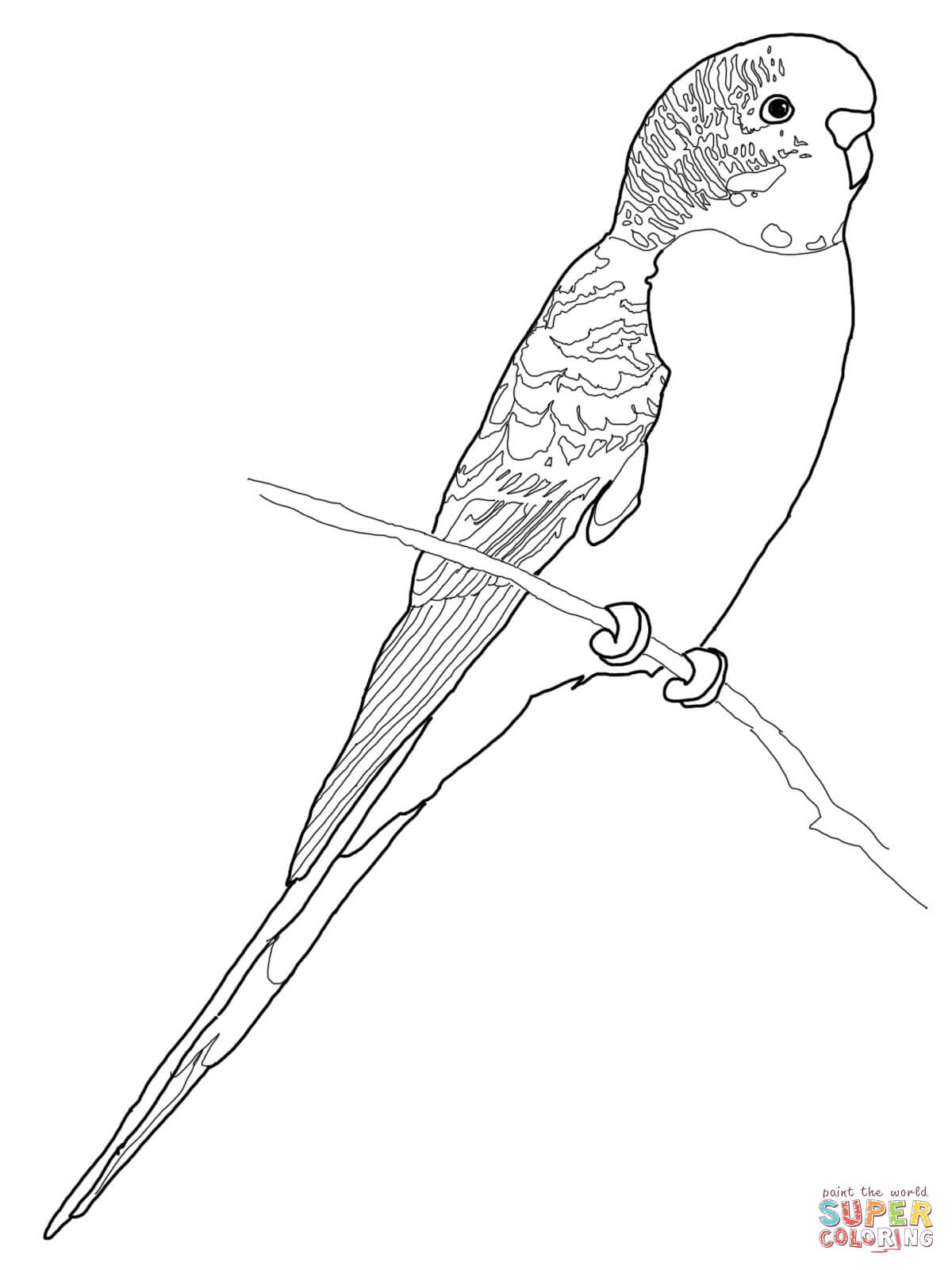 Budgerigar Parrot Coloring Page