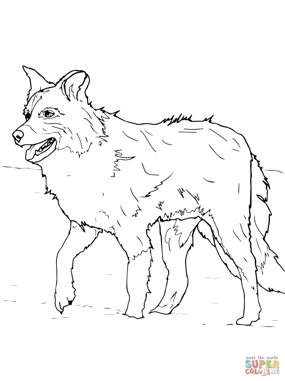 Ausmalbild Scotch Schaferhund Oder Border Collie