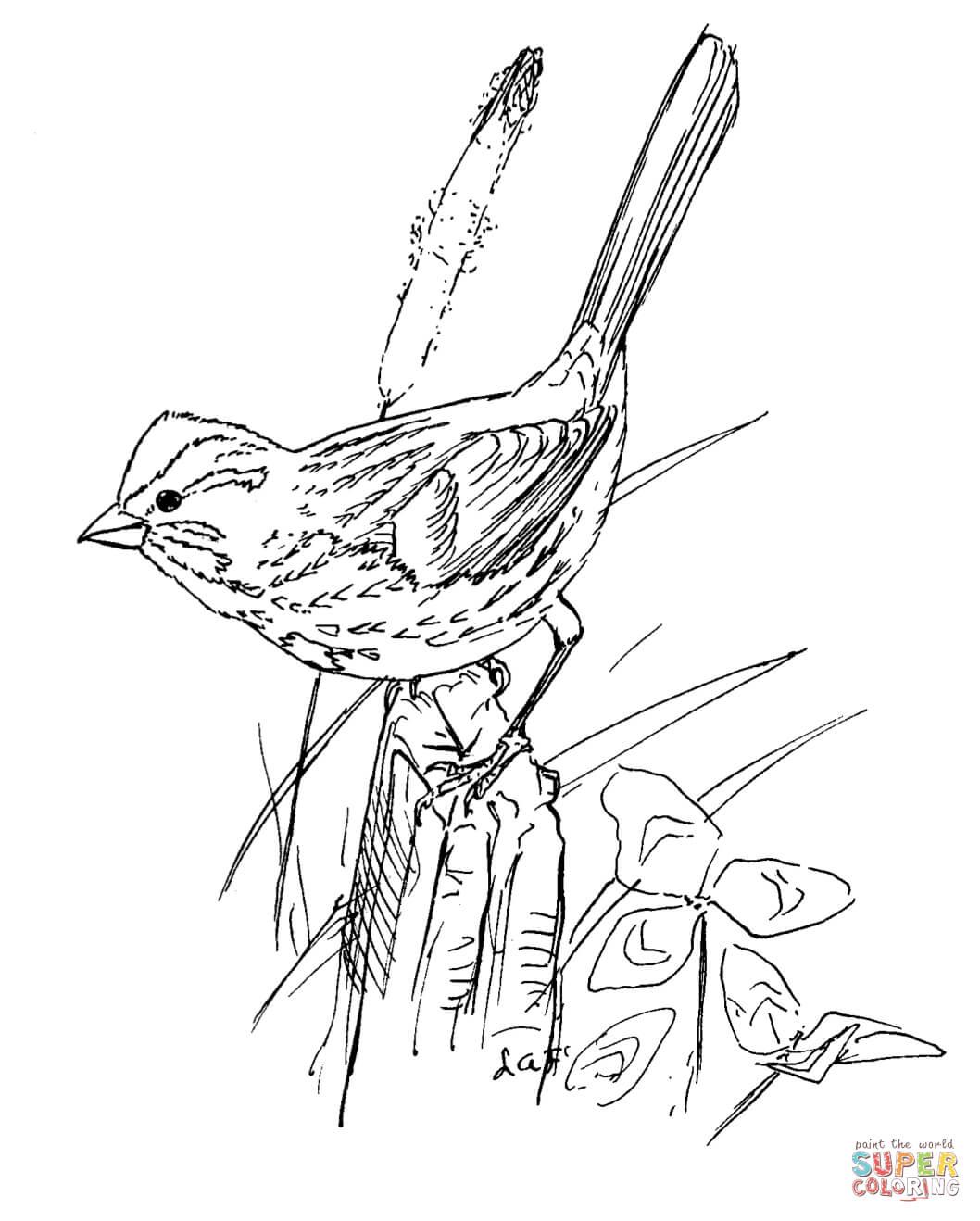 Song Sparrow Bird Coloring Page