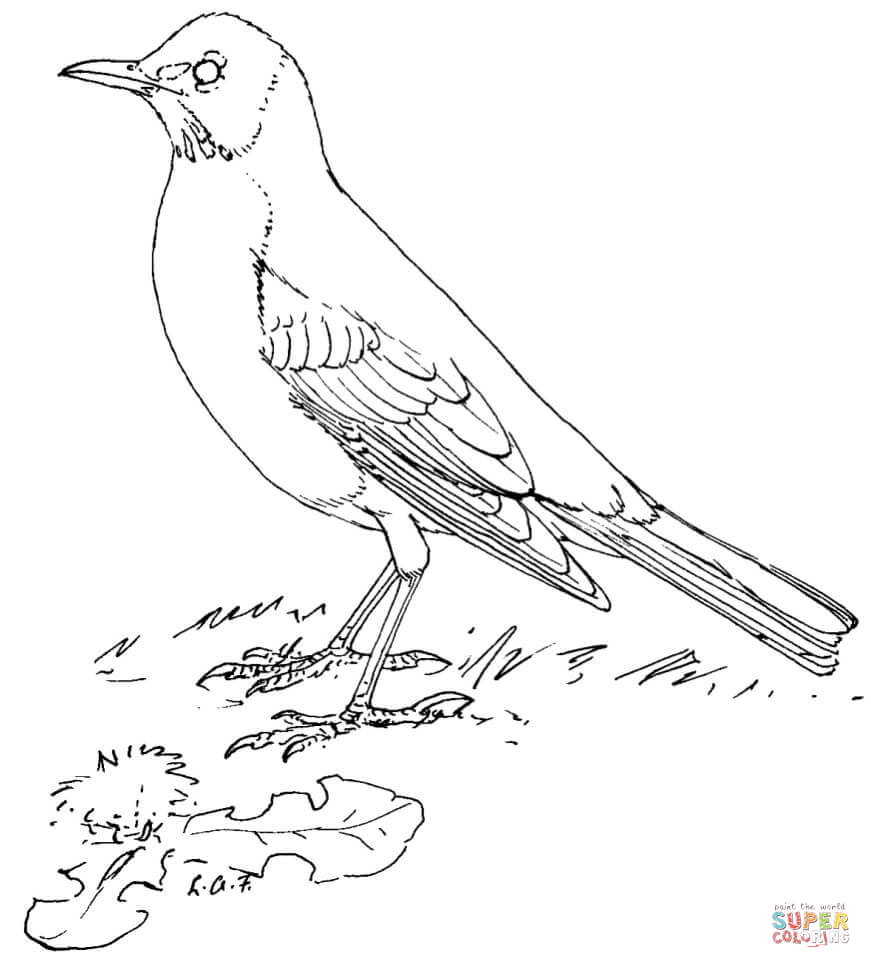 bluebird coloring page bird coloring pages spelling worksheets
