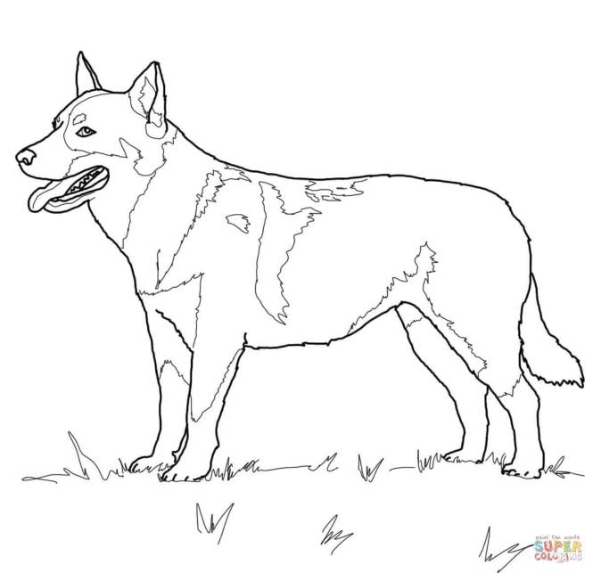 Click The Australian Cattle Dog Coloring Pages
