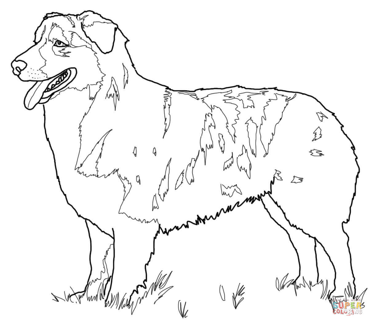 Ausmalbild Australian Shepherd