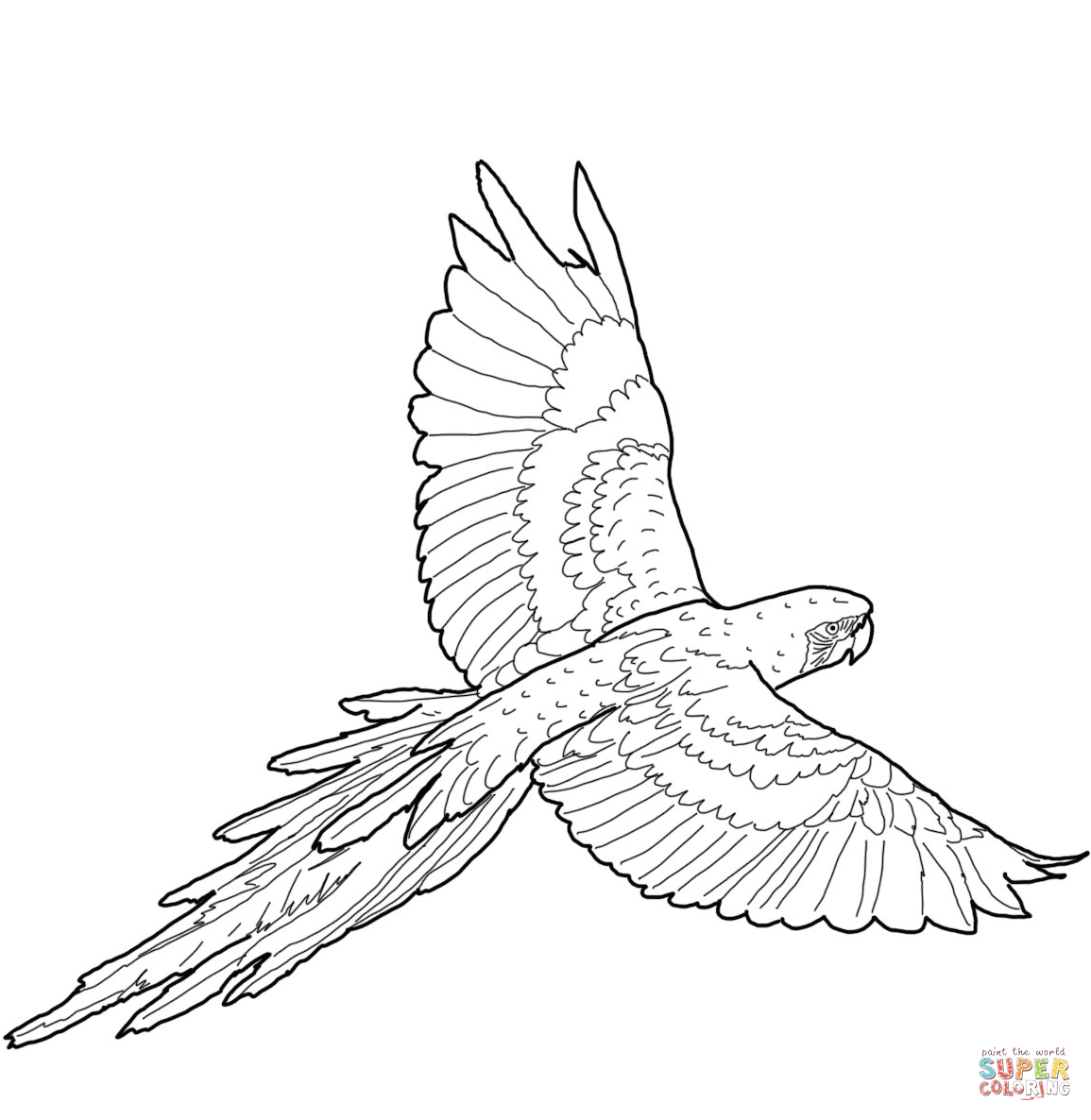 Flying Red And Green Macaw Coloring Page