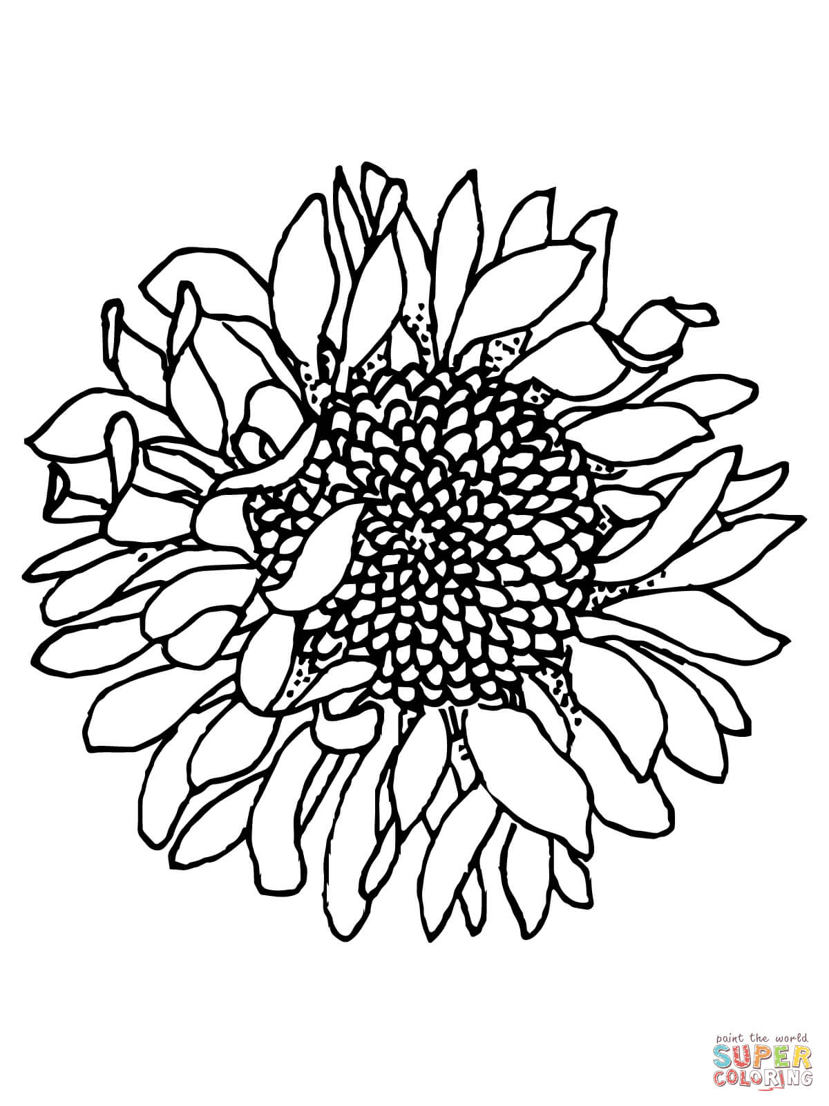 head of sunflower coloring page free printable coloring pages