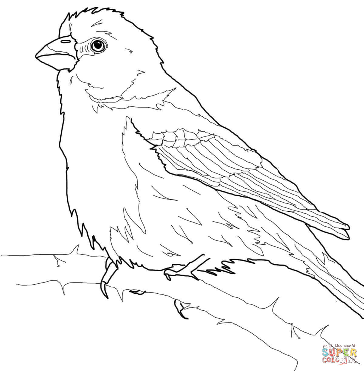 Color Worksheets Kindergarten Coloring Pages Gouldian Finch Color Best Free Printable Worksheets