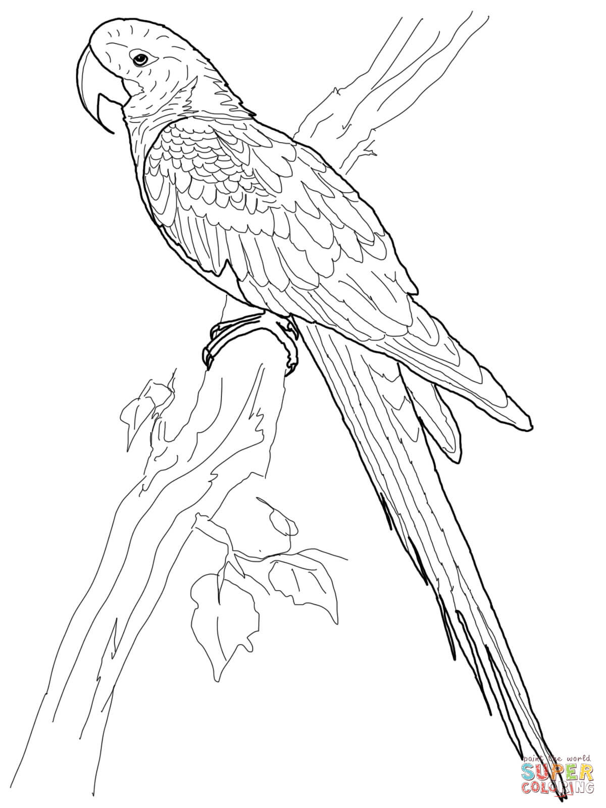 hyacinth macaw coloring page free printable coloring pages