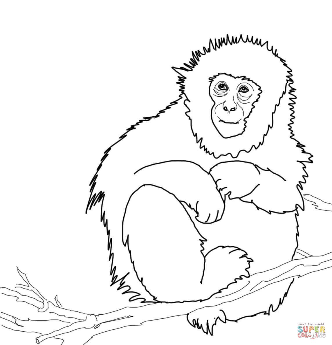 Disegno Di Il Macaco Giapponese Da Colorare