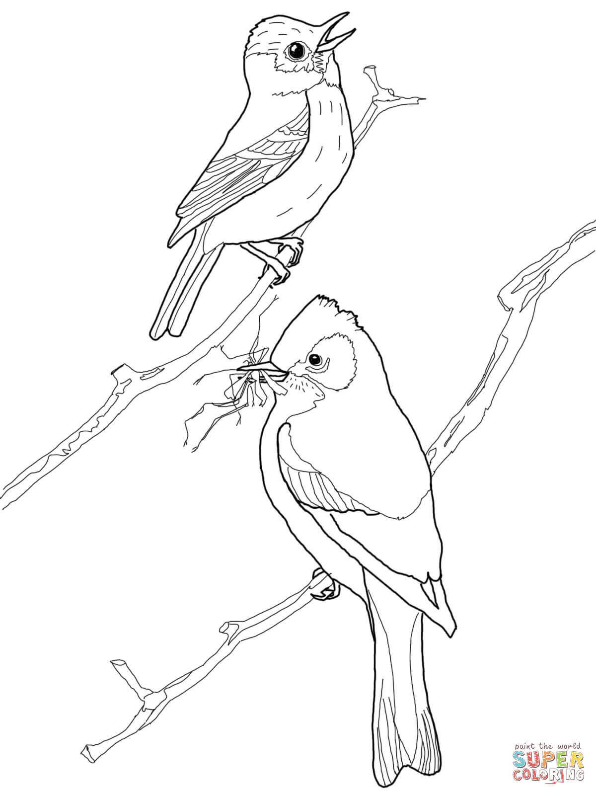 Least Flycatcher Birds Coloring Page