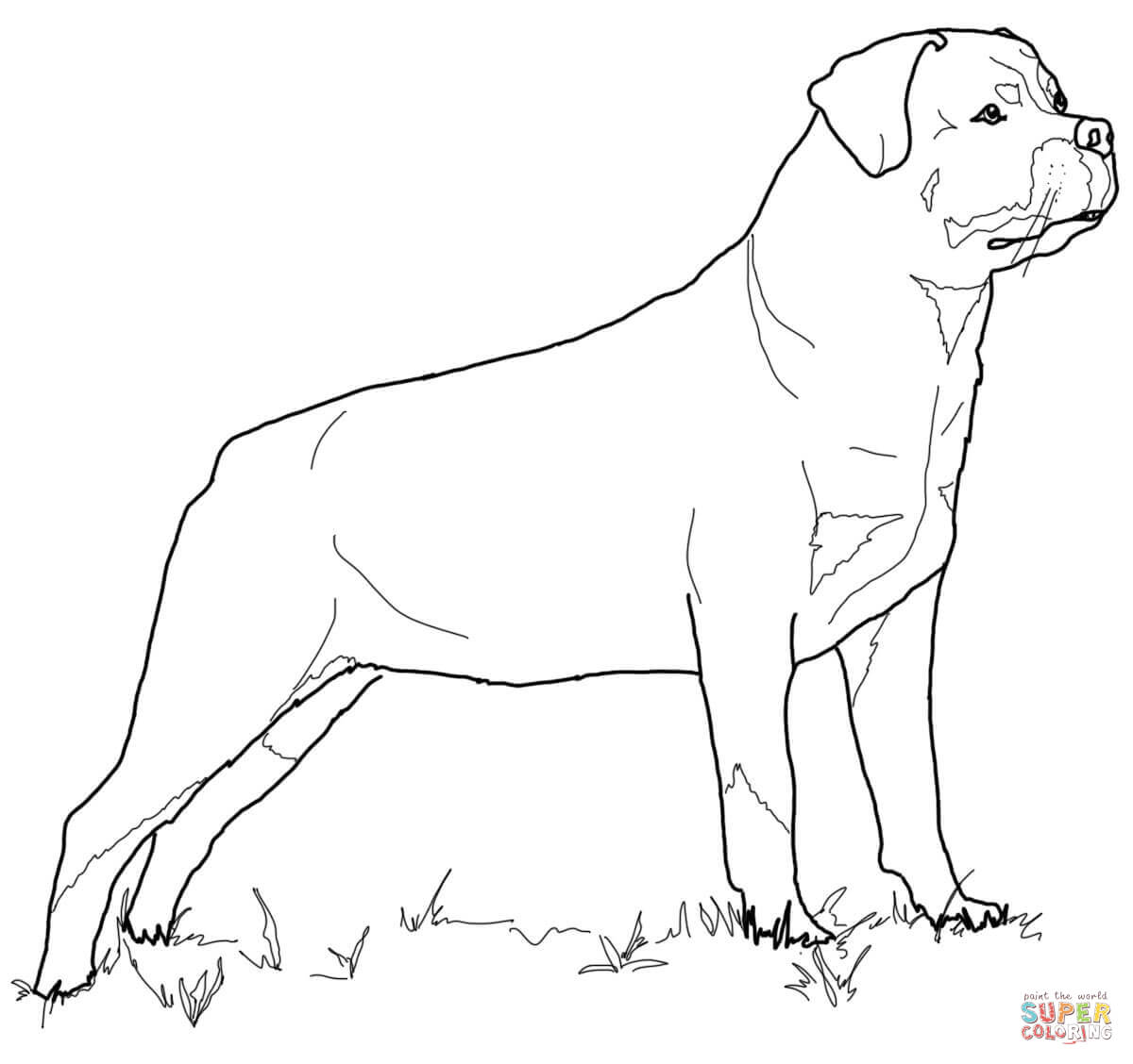 Rottweiler Coloring Page