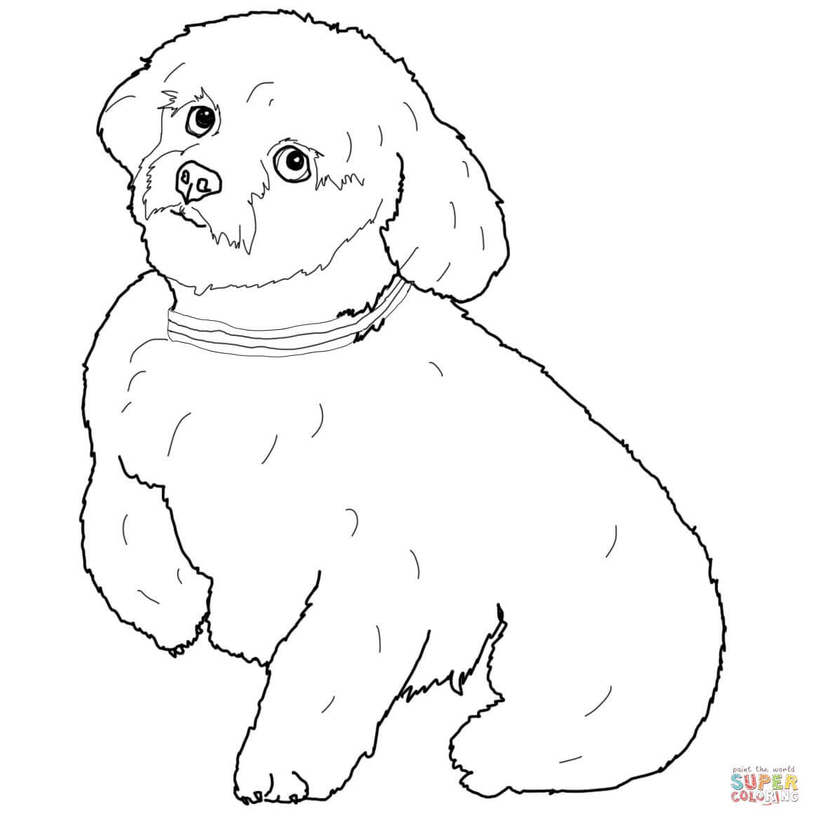 Short Hair Maltese Dog Coloring Page