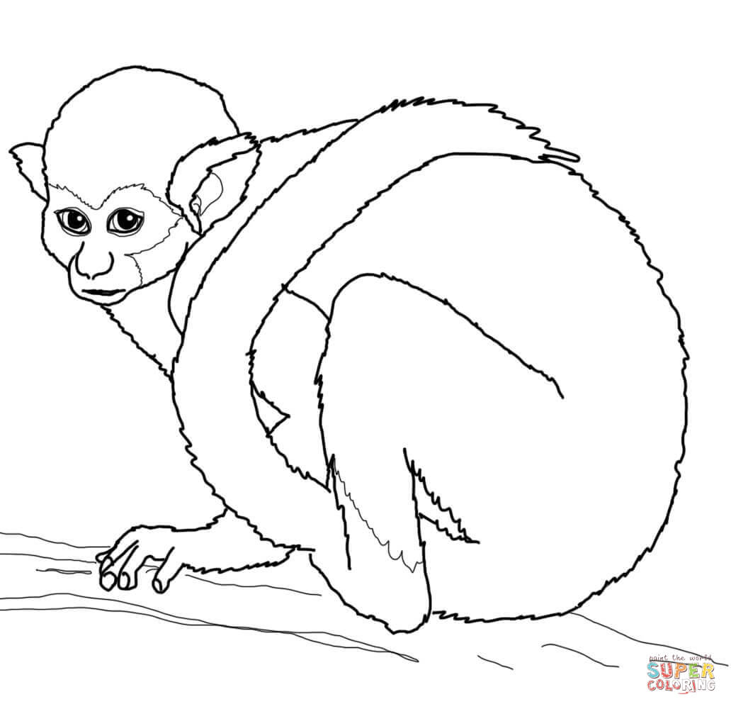 Squirrel Monkey Coloring Page