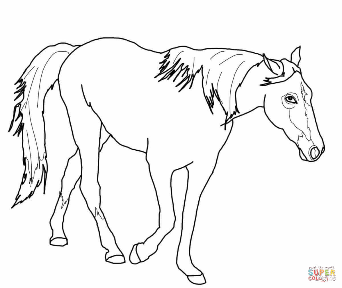 Tennessee Walking Horse Coloring Page