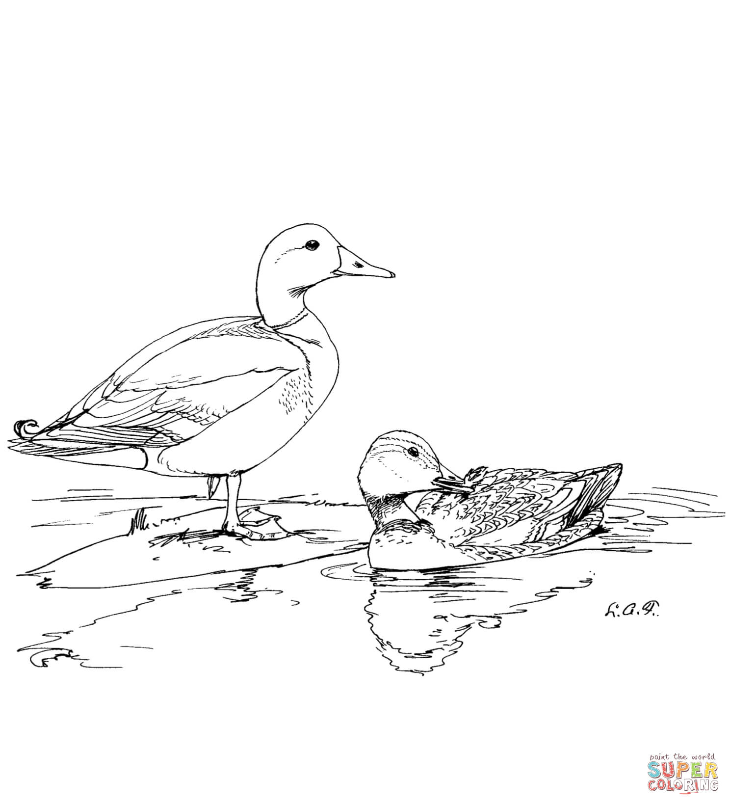 Two Mallard Ducks Coloring Page