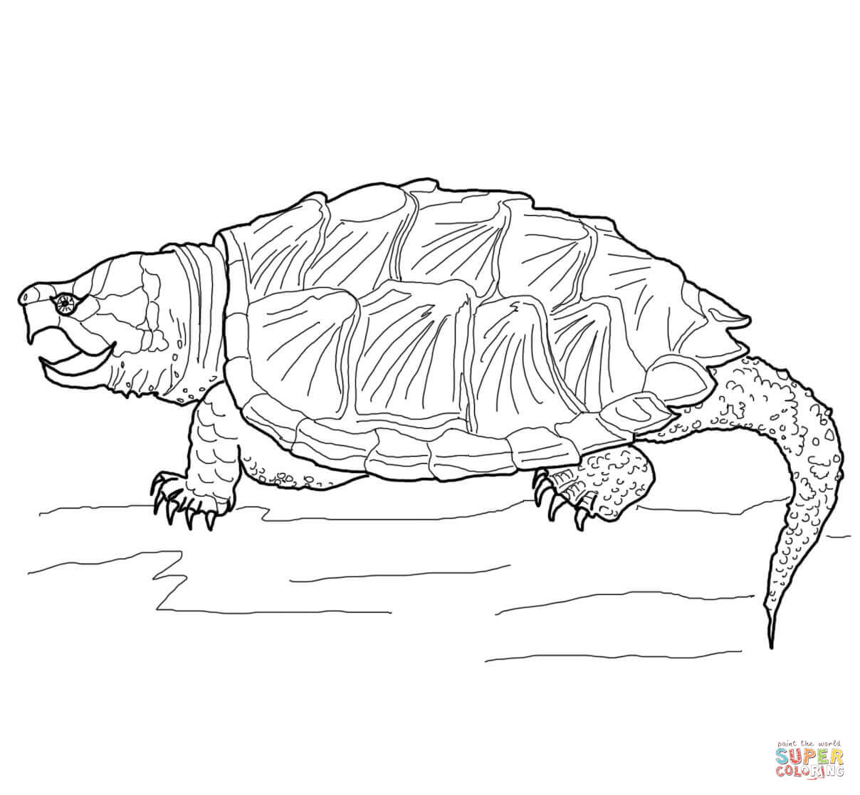 Alligator Snapping Turtle Coloring Page